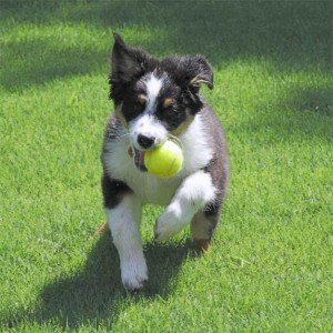 dog-and-ball