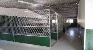kennels-stretched